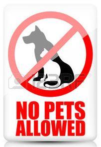 no pets2